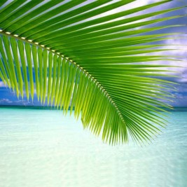 Coconut Palm Leaf