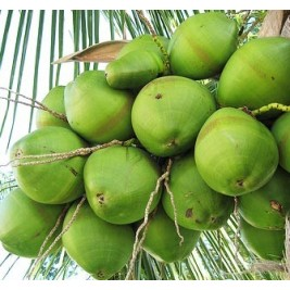 Green Coconut