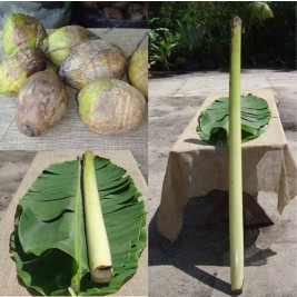 Hawaiian Pig Roast Kit - Large (126 pounds and up)