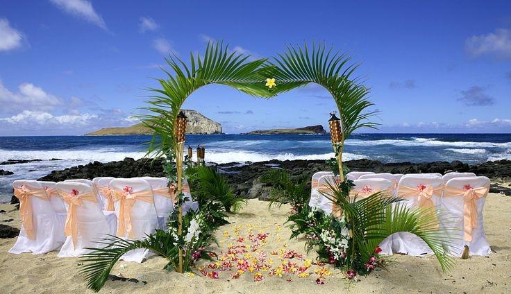 Coconut palm leaves tropical decoration florida coconuts store httpstoreflorida coconutsmediacatalogproductcache1image9df78eab33525d08d6e5fb8d27136e95papalm decoration wedding 011g junglespirit Images