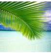 Small Coconut Palm Leaf