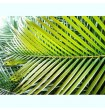 Small Areca Palm Leaves for tropical decorations