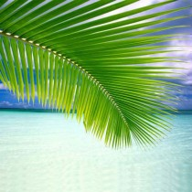 Small Coconut Palm Leaf